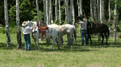 Family saddle horses for a mountain ride P HD 0342 Stock Footage