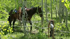 Horse saddle stomps ground in green forest P HD 0315 Stock Footage
