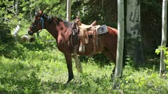 Horse with saddle standing in green forest P HD 0313 Stock Footage