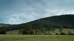 Moroka Hill and cattle Stock Footage