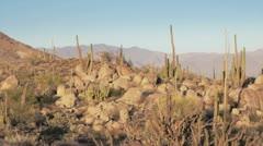 Cactus panorama Stock Footage