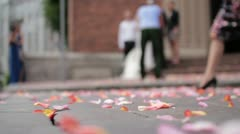 Roses Stock Footage