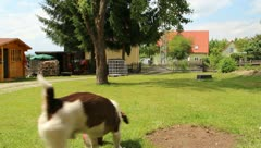 Holiday and Freetime Elements - Dog playing Ball Stock Footage