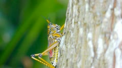 Grasshopper climbs a tree Stock Footage