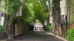 Tunnel of Trees Stock Footage