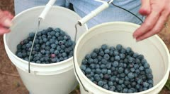 woman with buckets of blueberries - stock footage