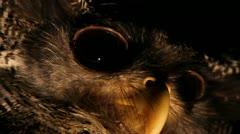 Owl, close-up - stock footage