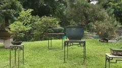 Bonsai Garden Stock Footage