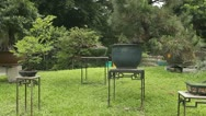 Stock Video Footage of Bonsai Garden