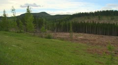 Clear cut forest pan Stock Footage