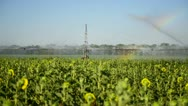 Irrigation of the field with rainbow Stock Footage