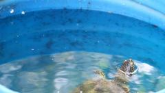 European Pond Terrapin with head out of the water, Emys orbicularis Stock Footage