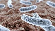 Pathogenic bacteria Stock Footage