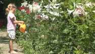 Child Playing with Sprinkler in the Garden, Little Girl Watering Flowers Stock Footage
