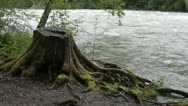 Stump and rapids Stock Footage