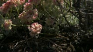 Flowers Rocky Landscape 03 Stock Footage