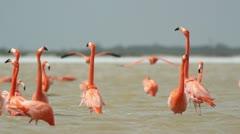 Pink flamingo mexico wildlife bird Stock Footage