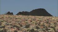 Flowers Rocky Landscape 16 Stock Footage