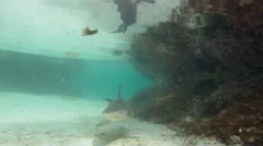 Bull Shark Underwater Close Up Stock Footage