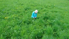 Small girl  on meadow with dandelio Stock Footage
