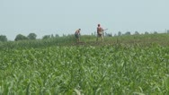 Stock Video Footage of Peasants in the Corn Field, Agriculture