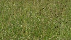 Leaves of grass floating in the wind Stock Footage