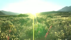 Flower Meadow Sunburst 13.1 Stock Footage