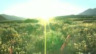Flower Meadow Sunburst 13.1 Stock Footage