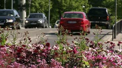 Cars moving behind pink flowers Stock Footage