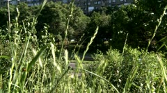 High grassm bushes and high way Stock Footage