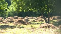Piles of cutted grass Stock Footage