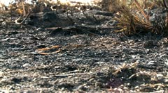 Burned grass Stock Footage