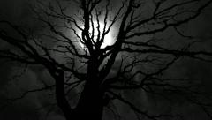 Wicked Tree Full Moon Timelapse - stock footage