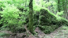 Holiday and Freetime Elements - Deep Forest and Rocks - stock footage