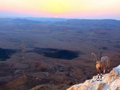 nubian ibex on the rim of the crater ramon - stock photo