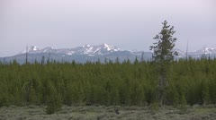 Mountains & Forest 01 by dwking Stock Footage