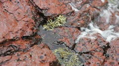 Close up of water washing onto rocks & sea plants in Bittangabee Bay NSW Aus Stock Footage