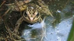 frog handheld - stock footage