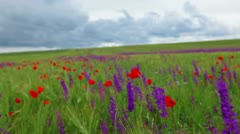 Field of spring flowers Stock Footage