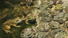 Time Lapse Frog Pond Activity Stock Footage