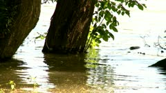 Tree in nature Stock Footage