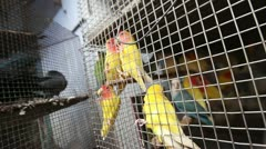 Mumbai Caged Birds 2 Stock Footage