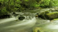 Stock Video Footage of Timelapse of blurred water in green forest river