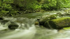 Timelapse of blurred water in green forest river Stock Footage