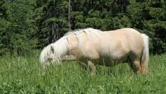 White Pony eating grass - stock footage