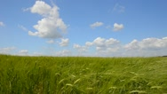 Wheat crop Stock Footage