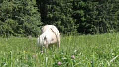 White Pony on meadow Stock Footage