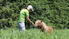 Brown Pony eating apple from girl Stock Footage