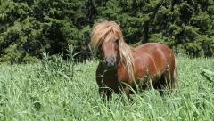 Beautiful Brown Pony Stock Footage