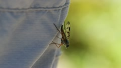 Meadow Plant Fly-Bug Stock Footage